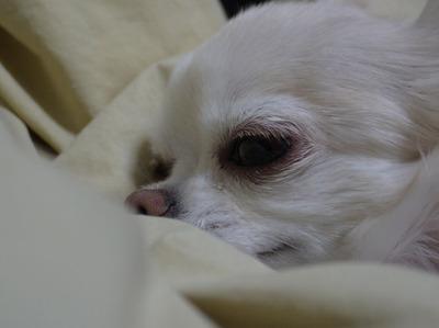 ちょっと寒いけど、よく寝ます。ワンワン1