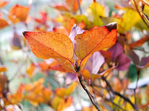 2009年にも秋が来ましたね。。。1