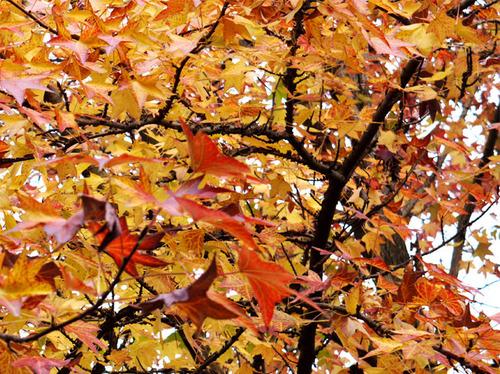 2009年にも秋が来ましたね。。。2