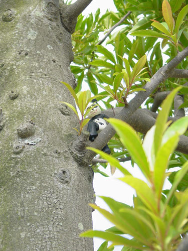 こんなに暑けりゃパンダも木に登るって