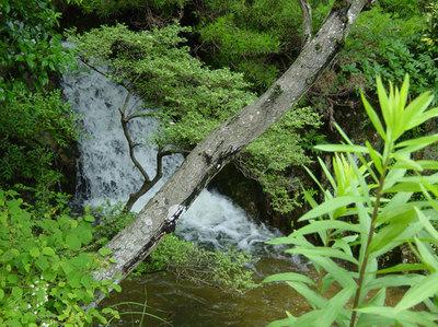 自然[夏、田舎]1